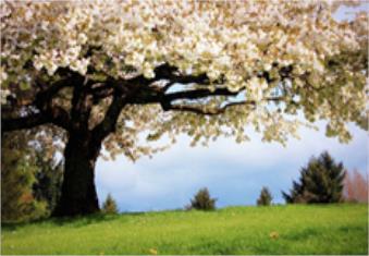 احوال روزگار بهاری است