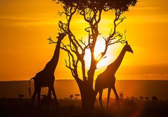 کنیا، سرزمین راز بقا
