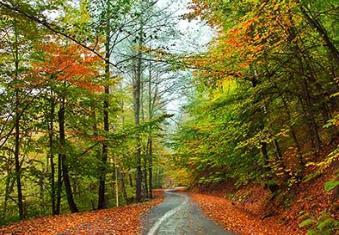 در هوای سبزِ جنگل